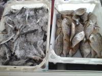 Mercadillo de Pescado de Las Galletas
