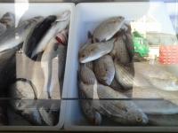 Mercadillo de Pescado de Los Cristianos