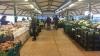 Mercado del Agricultor de la Villa de Candelaria